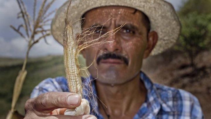 Fenômenos climáticos deixam 1,4 milhão de pessoas em risco de fome na América Central, diz ONU
