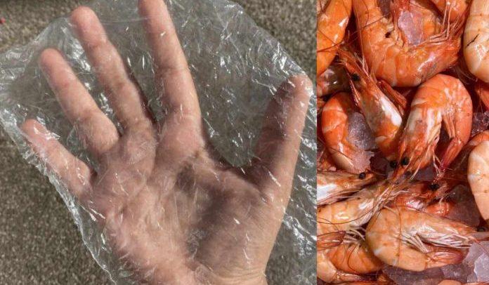 Estudante transforma casca de camarão em bioplástico que se degrada em 33 dias
