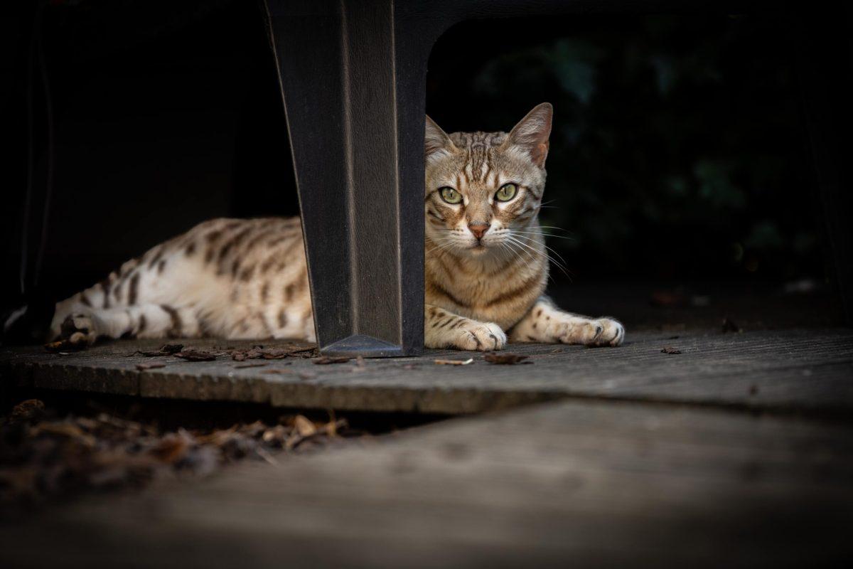 Katten fotografie