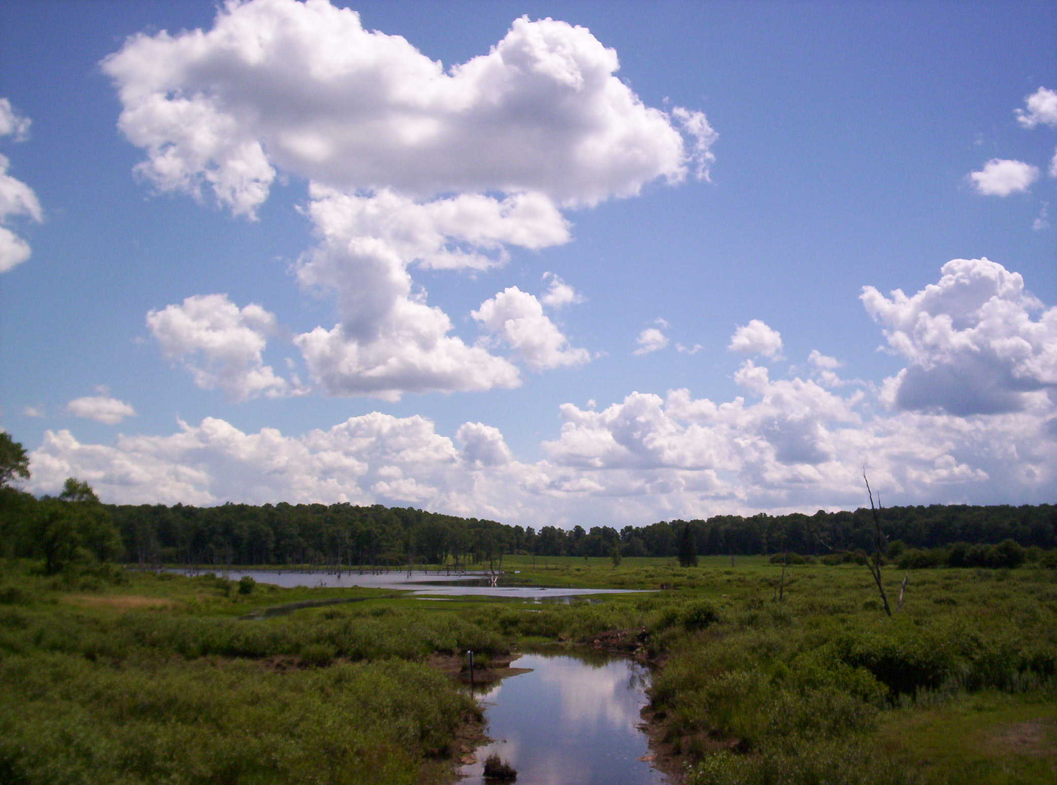 Buzzard Swamp, Forest County, PA, Summer 2006