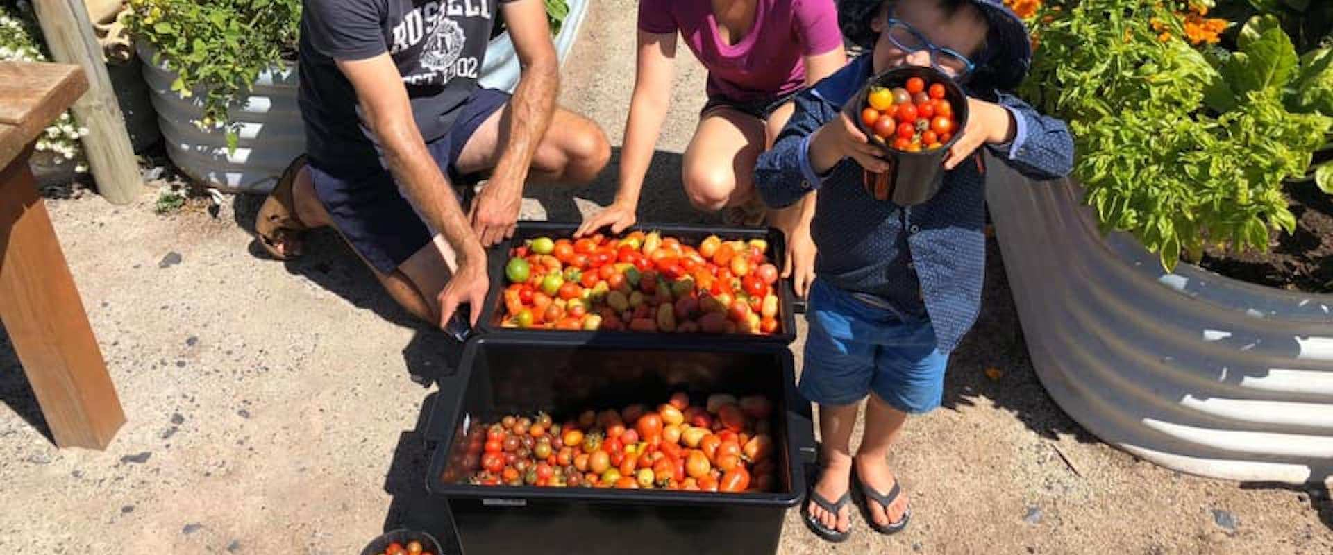 The cape family growing tomatoes