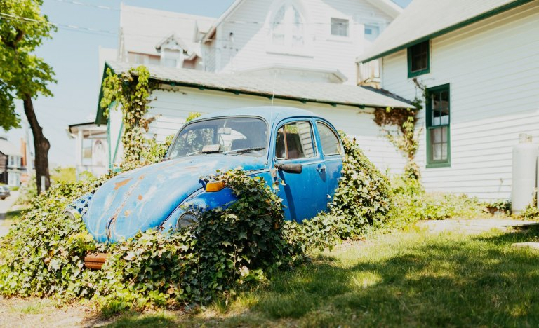 Photograph of a car with vines growing over it
