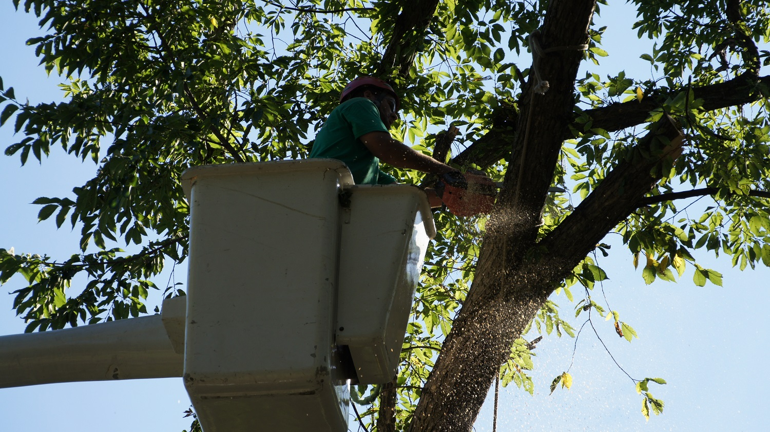 Tree Removal, tree care, waukesha, milwaukee