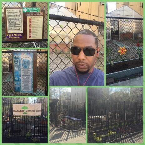 Urban gardens in NYC