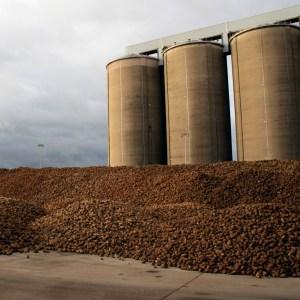 sugar beet and silos