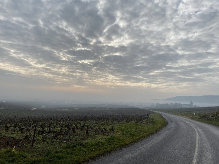 Fog over vines of Champagne