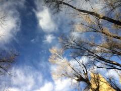Upside down morning