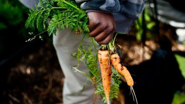 Black farmers file class action lawsuit in Memphis ...