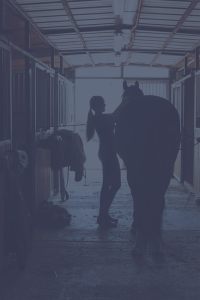 Search Equine Jobs