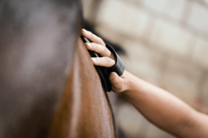 Equine Jobseekers Frequently Asked Questions