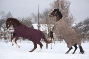 The Grooms List - Rugging horses in winter - Caroline Carter Recruitment Ltd