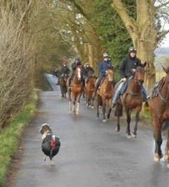 Equine Disciplines - working in racing