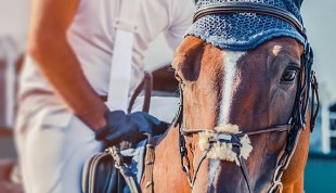 Equine Employers - Equine Recruitment Agency - The Grooms list by Caroline Carter Recruitment