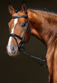 Equine Recruitment - Subscriptions for Employers