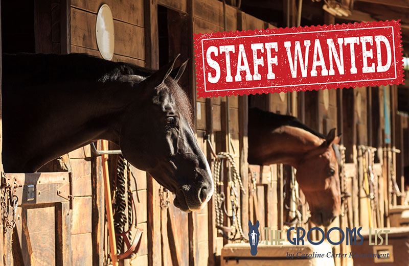 Find Equine Grooms and Riders - The Grooms List by Caroline Carter Recruitment
