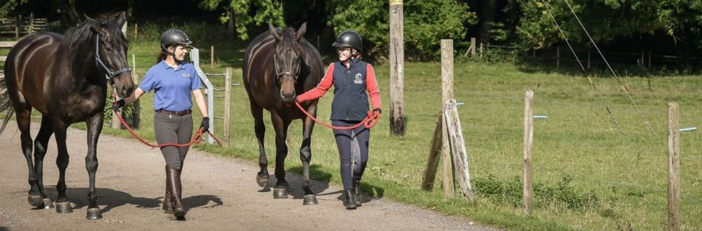 How to negotiate a salary in the equine industry - arrangements that suit both parties