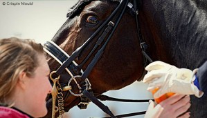 Competition Grooms - Having to think of everything