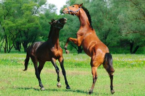Spring Forward in the Equine Industry - Spring Fever