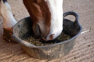 Feeding YOURSELF for performance - healthy eating for equine grooms - horses eat better than most grooms