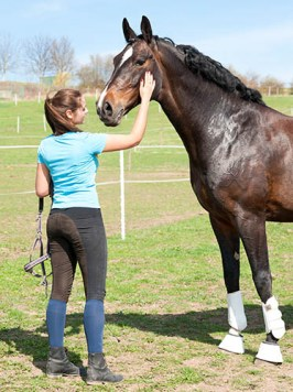 Employing an Apprentice Groom - the Grooms of the Future - Building an equine career