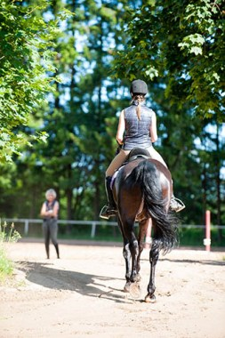 Employing an Apprentice Groom - the Grooms of the Future - Riding and Non-Riding Courses