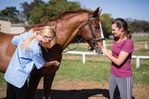 Are you ready to be a Sole Charge Groom - dealing with emergencies