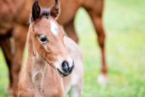 Equine Apprenticeships - Course Options - Breeding Apprenticeships
