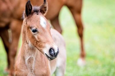 Equine Apprenticeships - Course Options - Breeding Apprenticeships