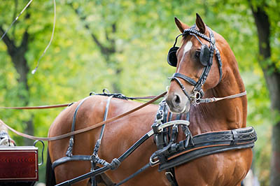 Equine Apprenticeships - Course Options - Carriage Driving Apprentices