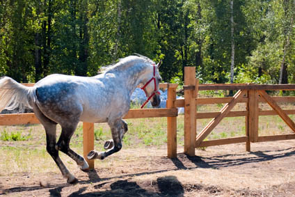 What are Dressage Grooms and Dressage Groom Jobs - performance horses