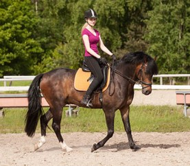 Become a Professional Rider - take criticism and instruction