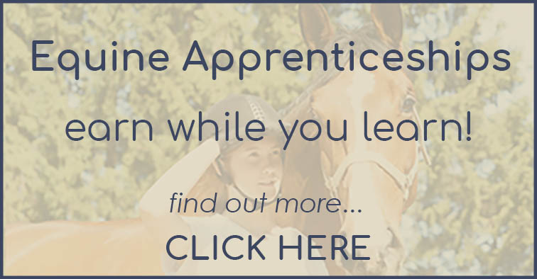 Become a Groom - Equine Apprenticeships for Grooms