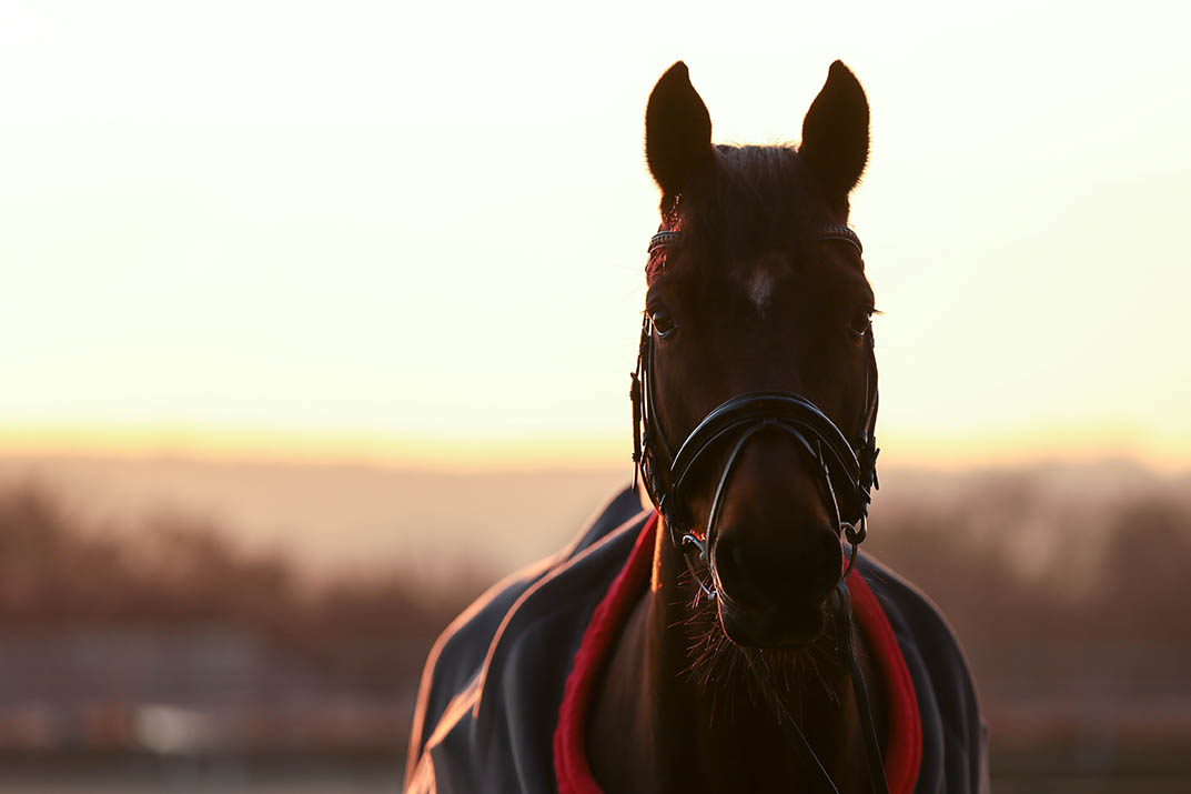 Keeping Your Equine Athletes Warm