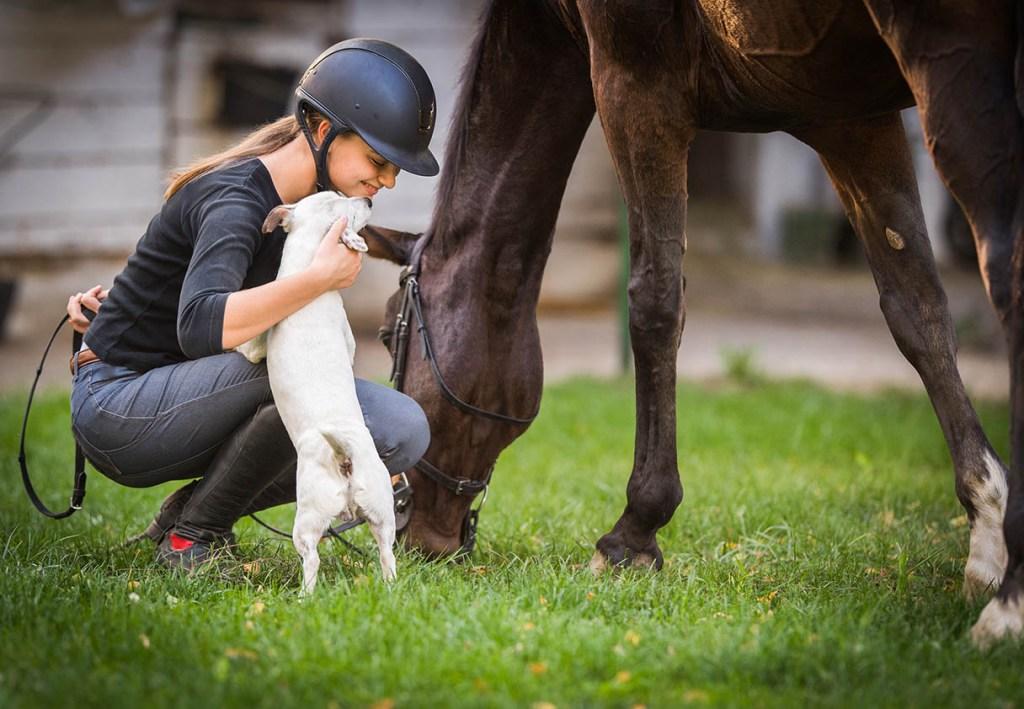 Yard Dog Etiquette - taking a dog to work