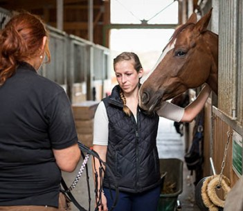 5 reasons why the equine industry needs Apprentice Grooms - doing things someone elses way