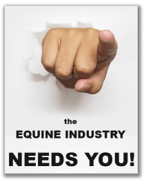 5 reasons why the equine industry needs Apprentice Grooms - the future of the equestrian industry