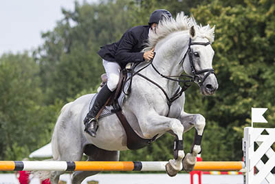 The fine art of owning AND working with horses - competiting your own horse