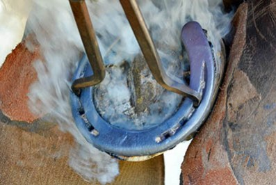 How to maintain a good relationship with the yard Farrier - Tricky Horses