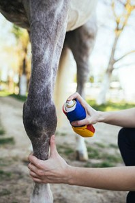 Treating Minor Horse Wounds - sprays and lotions