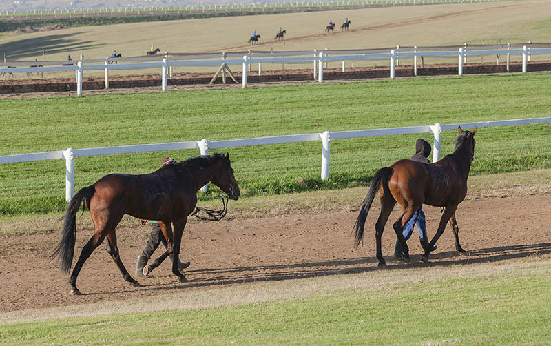 Salaries in the Horse Racing Industry