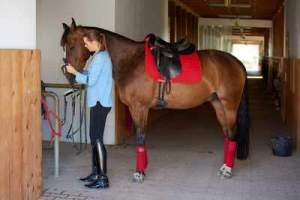 Coronavirus Affects Equine Recruitment - Grooms