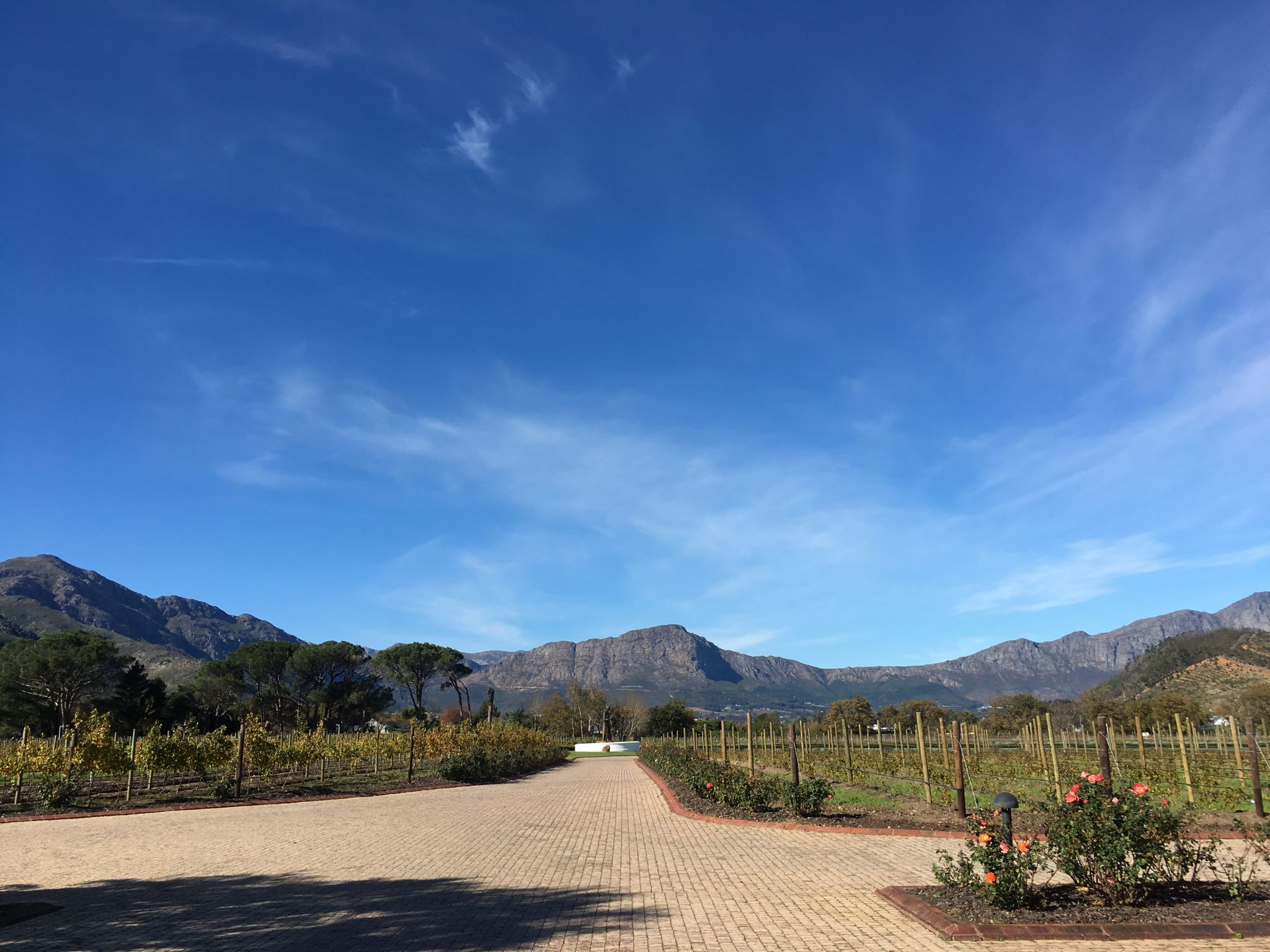 La-Motte-Franschhoek-Cape-Winelands