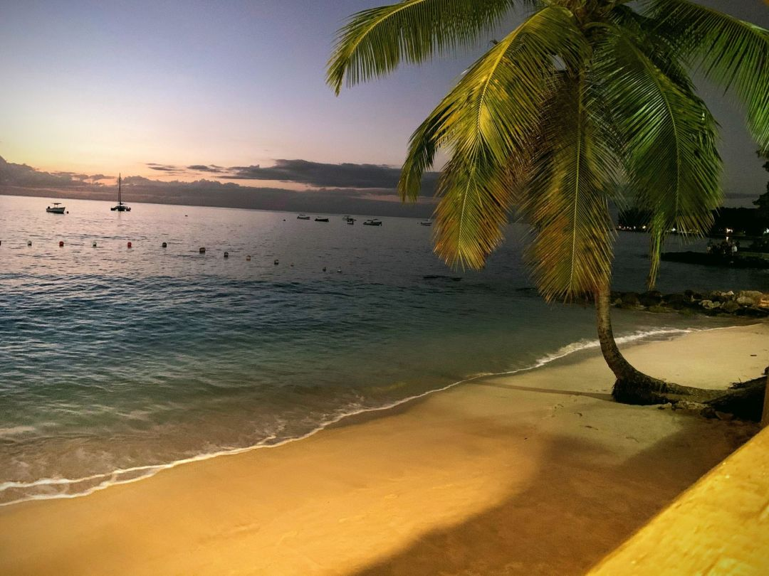 Barbados Trip Report 2020
