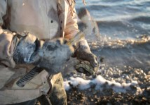 "Ed ""Lee Man"" Atkins begins shucking an oyster near St. Helena's Island."