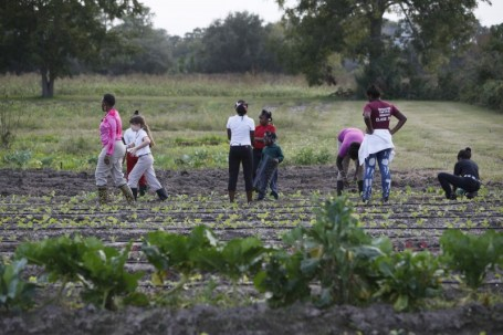 Sarà‡ Reynolds Green, in pink, leads students as they transplant greens. From left are Green, Carolyn Durrance, Taylor Linyard, Jameah Moore, Zariah Green, Jameka Young, Janice Baker and Kalila Saunders.