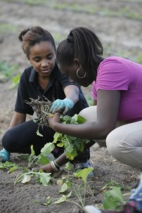 Kalila Saunders and Jameka Young work together to plant kale at Marshview Community Organic Farms.