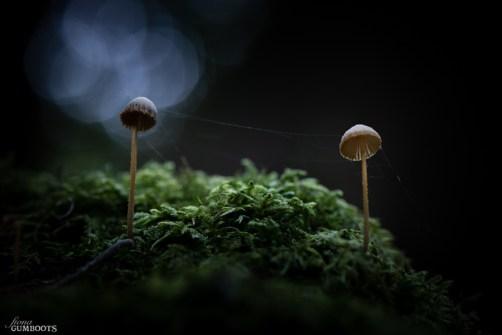 Fungi 2016