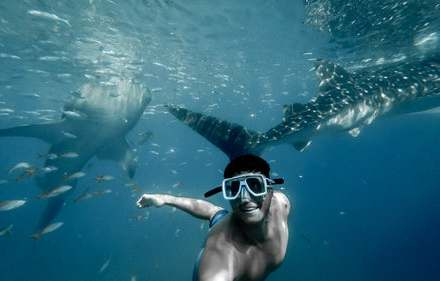Man taking a photo with underwater selfie stick while he is swimming with sharks