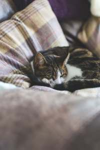 Cat sleeping upon a tartan covered pillow that has undergone re-upholstery Glasgow