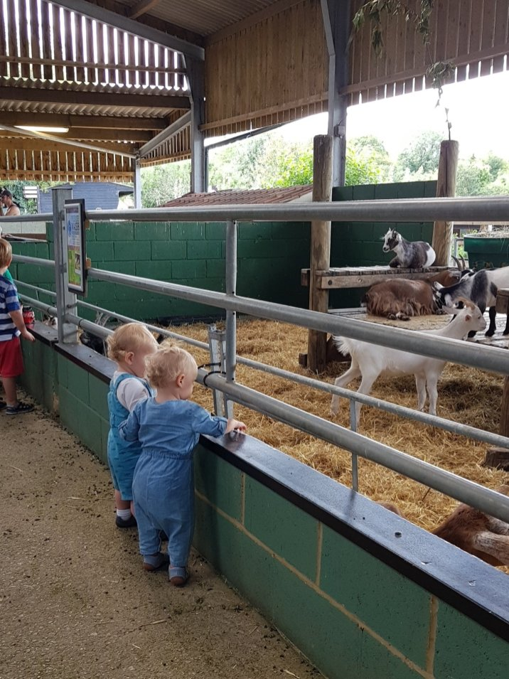 toddlers looking at goats bocketts farm